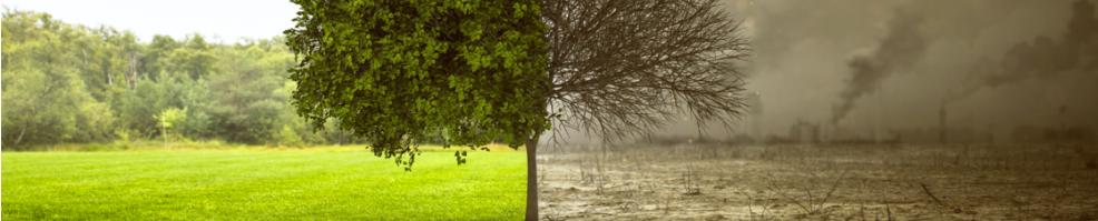 Sites sols pollués : Plan de gestion